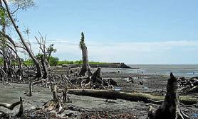 Laguna de Términos Mangroves campeche