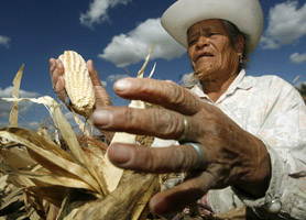 Campeche Farming